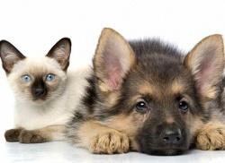 Алергия от домашни животни - кучета, котки