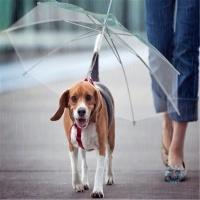 Чадър за куче