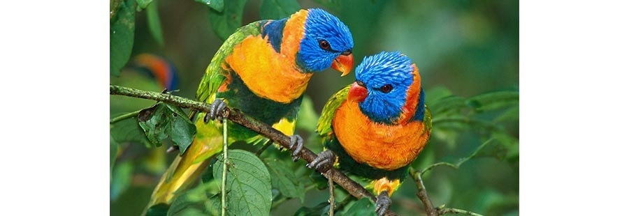 Градински къщички за птици
