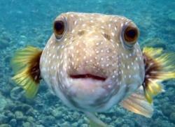 Грижи за здравето на рибките