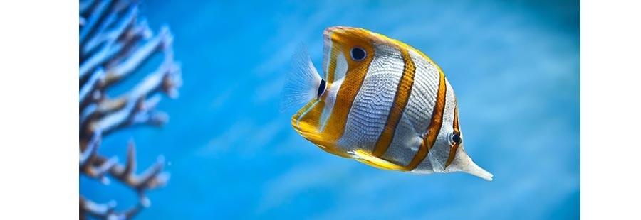 Храна за рибки