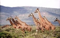 Животни рекордьори - Най-високите
