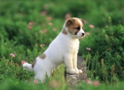 Как да осигурим успешна защита от кърлежи и бълхи за кучето си?