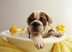 Колко често трябва да къпя кучето си?