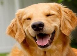 Кучето като домашен любимец