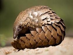 Най-необикновенните животни на нашата планета - I част