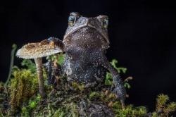 Робин Мур пусна фотокнига с 100-те редки жаби