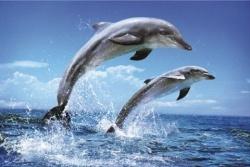 Удивителните способности на делфините
